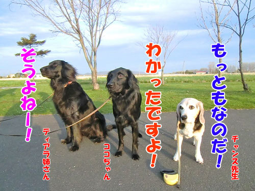 チャンスとティアラ+ココ-20130523-7-500.jpg