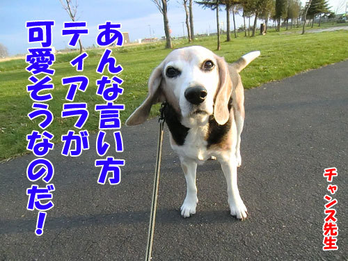 チャンスとティアラ+ココ-20130523-9-500.jpg