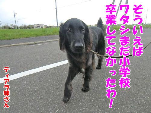チャンスとティアラ+ココ-20130524-2-500.jpg