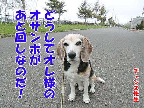 チャンスとティアラ+ココ-20130524-5-500.jpg