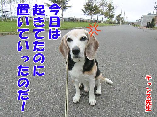 チャンスとティアラ+ココ-20130524-6-500.jpg