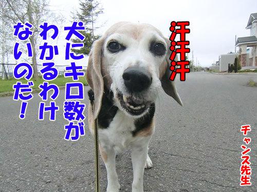 チャンスとティアラ+ココ-20130524-7-500.jpg