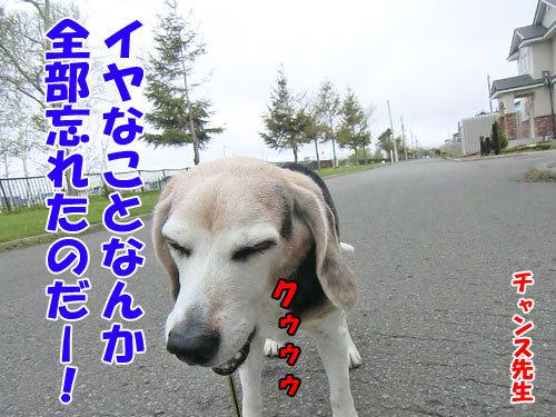 チャンスとティアラ+ココ-20130524-8-500.jpg