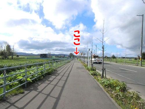 チャンスとティアラ+ココ-20130525-1-500.jpg