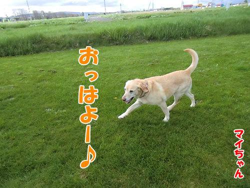 チャンスとティアラ+ココ-20130525-2-500.jpg