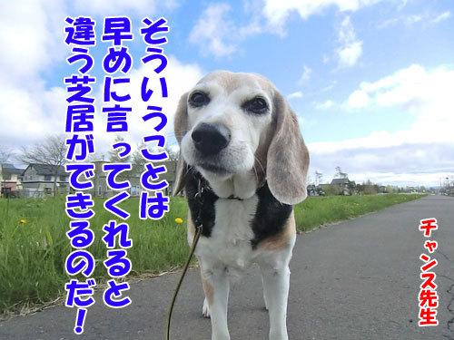 チャンスとティアラ+ココ-20130525-8-500.jpg