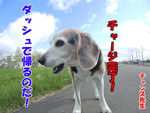 チャンスとティアラ+ココ-20130525-9-500.jpg