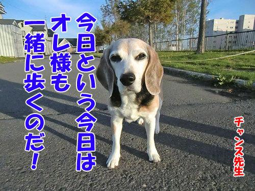 チャンスとティアラ+ココ-20130526-1-500.jpg