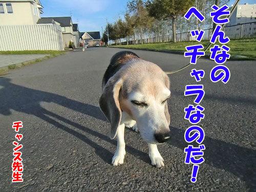 チャンスとティアラ+ココ-20130526-2-500.jpg