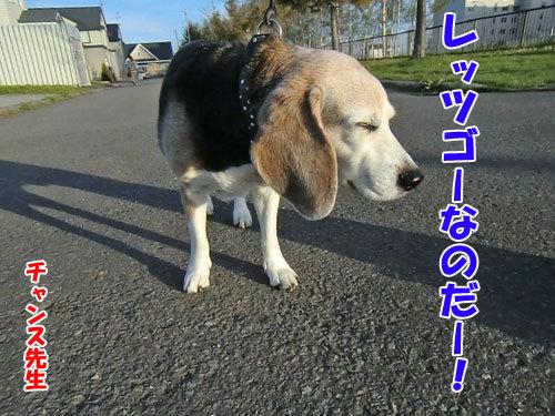 チャンスとティアラ+ココ-20130526-3-500.jpg