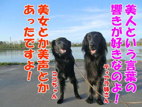 チャンスとティアラ+ココ-20130526-9-500.jpg