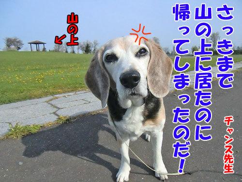 チャンスとティアラ+ココ-20130628-1-500.jpg