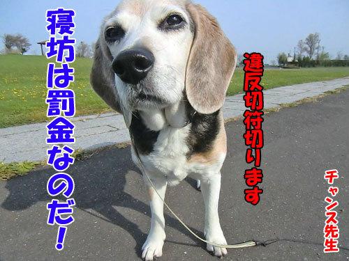 チャンスとティアラ+ココ-20130628-2-500.jpg