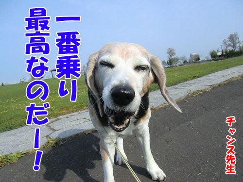 チャンスとティアラ+ココ-20130628-4-500.jpg