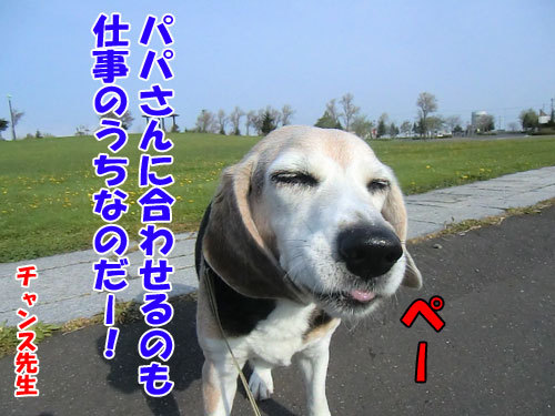 チャンスとティアラ+ココ-20130628-7-500.jpg