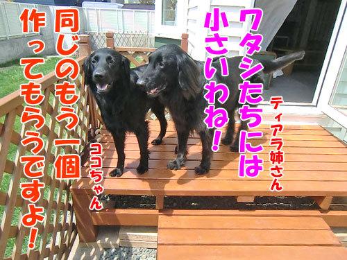 チャンスとティアラ+ココ-20130529-7-500.jpg