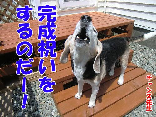 チャンスとティアラ+ココ-20130529-9-500.jpg