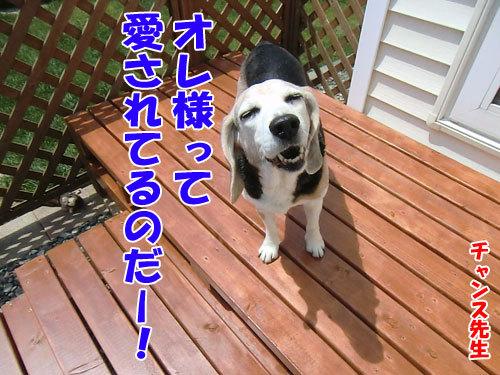 チャンスとティアラ+ココ-20130529-11-500.jpg