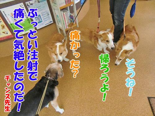 チャンスとティアラ+ココ-20130530-8-500.jpg