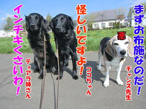 チャンスとティアラ+ココ-20130531-3-500.jpg
