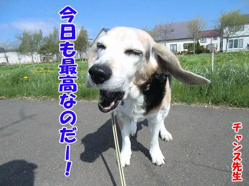 チャンスとティアラ+ココ-20130531-4-500.jpg