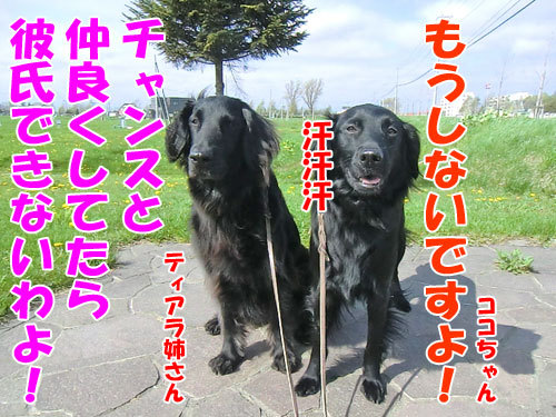 チャンスとティアラ+ココ-20130531-9-500.jpg