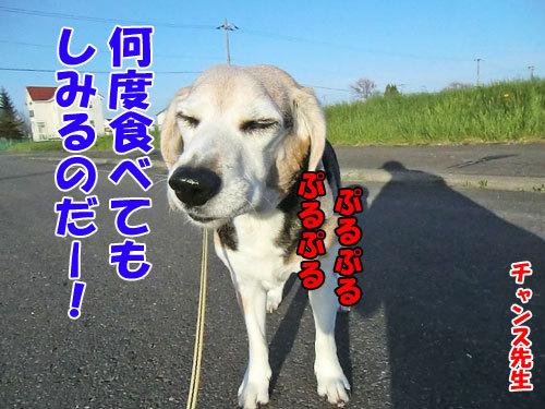 チャンスとティアラ+ココ-20130601-2-500.jpg