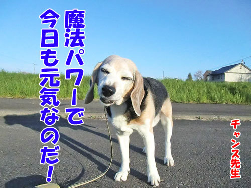 チャンスとティアラ+ココ-20130601-3-500.jpg