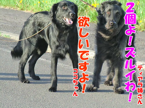 チャンスとティアラ+ココ-20130601-4-500.jpg