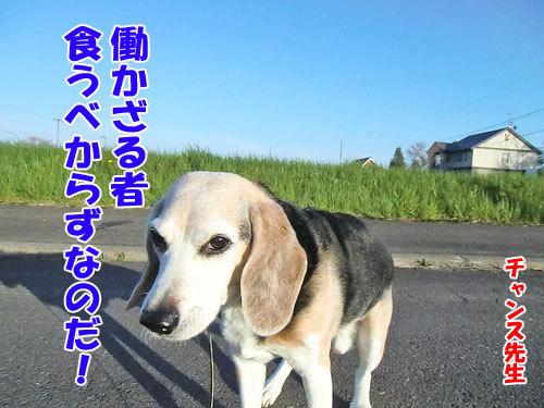 チャンスとティアラ+ココ-20130601-5-500.jpg