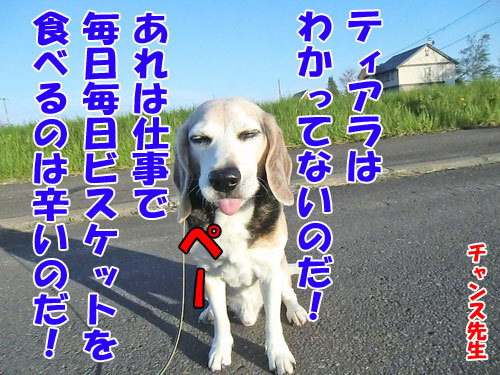 チャンスとティアラ+ココ-20130601-7-500.jpg