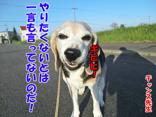 チャンスとティアラ+ココ-20130601-8-500.jpg