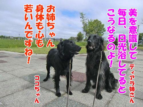 チャンスとティアラ+ココ-20130612-2-500.jpg