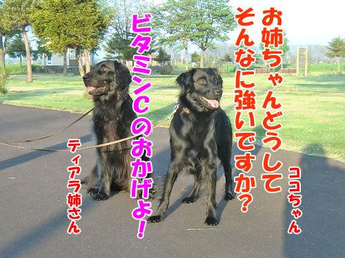 $チャンスとティアラ+ココ-20130613v-c.jpg