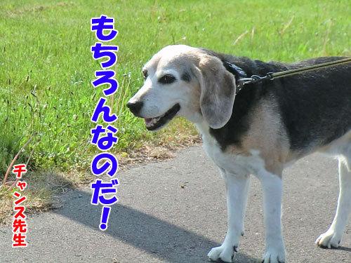チャンスとティアラ+ココ-20130614-4-500.jpg