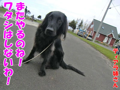 チャンスとティアラ+ココ-20120516-2-400.jpg
