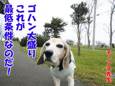 チャンスとティアラ+ココ-20120516-3-400.jpg