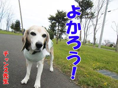 チャンスとティアラ+ココ-20120516-4-400.jpg