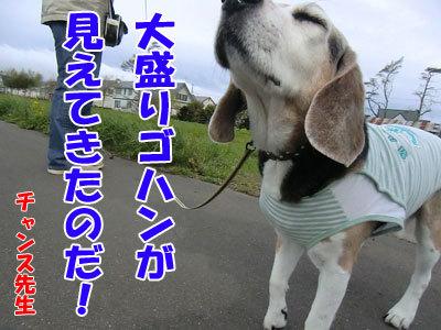 チャンスとティアラ+ココ-20120516-5-400.jpg