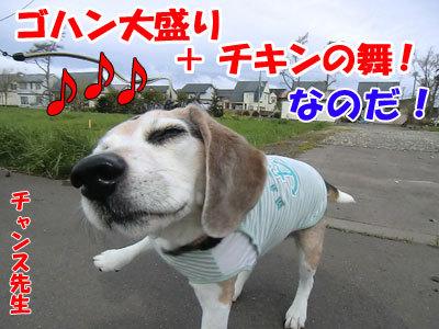 チャンスとティアラ+ココ-20120516-6-400.jpg