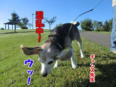 チャンスとティアラ+ココ-20121010-3-400.jpg