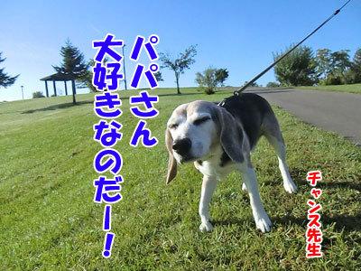 チャンスとティアラ+ココ-20121010-6-400.jpg