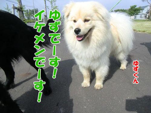 チャンスとティアラ+ココ-20130617-2-500.jpg