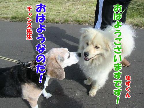 チャンスとティアラ+ココ-20130617-4-500.jpg