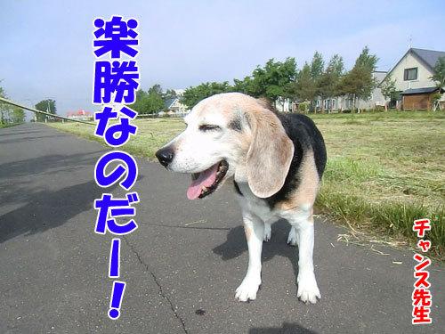 チャンスとティアラ+ココ-20130617-5-500.jpg