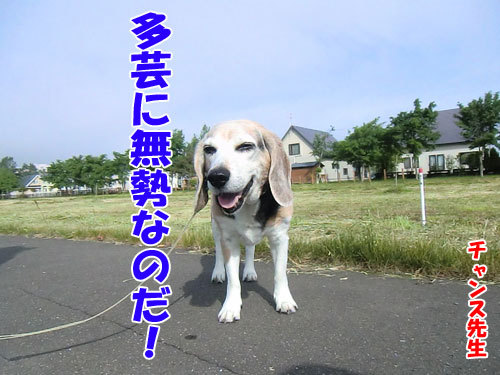 チャンスとティアラ+ココ-20130617-6-500.jpg