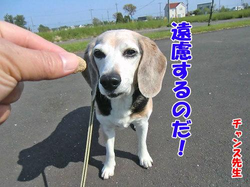 チャンスとティアラ+ココ-20130618-1-500.jpg