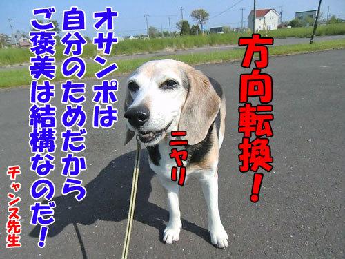 チャンスとティアラ+ココ-20130618-2-500.jpg