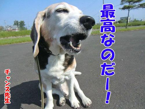 チャンスとティアラ+ココ-20130618-5-500.jpg