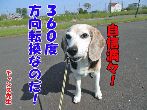 チャンスとティアラ+ココ-20130618-6-500.jpg